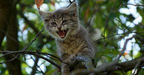 gatto-albero