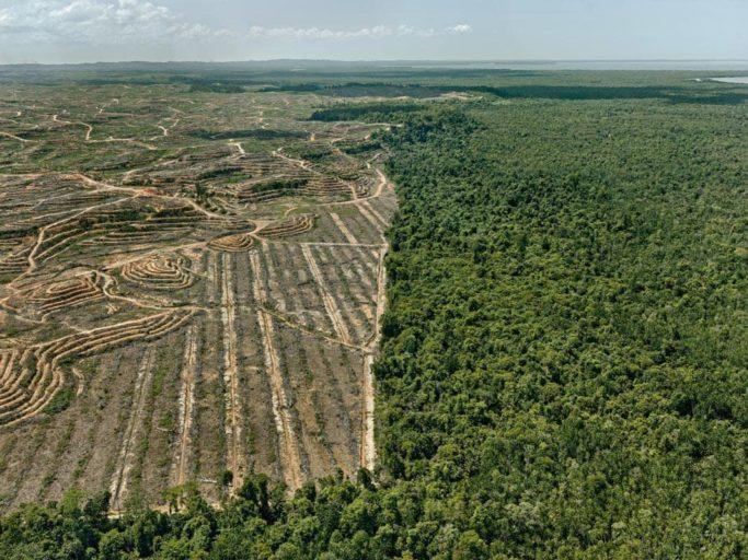 01_borneo_olio-di-palma-e-deforestazione
